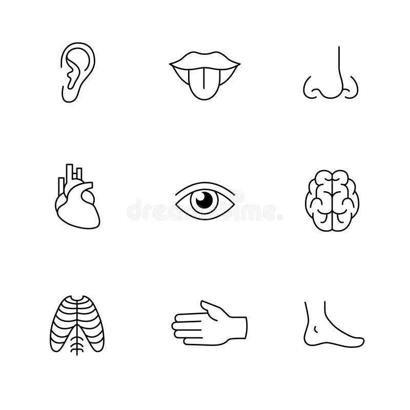Medicinska symboler gör linjen konstuppsättning tunnare mänskliga organ royaltyfri illustrationer