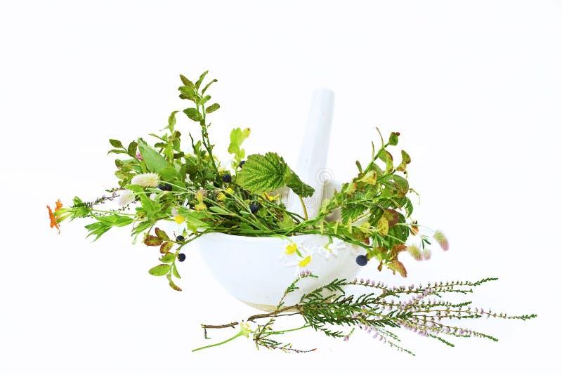 medicinska växter royaltyfria bilder