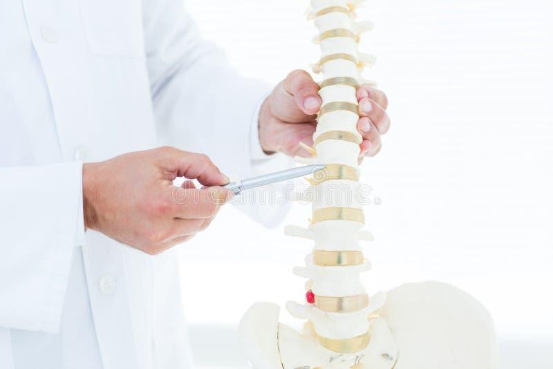 Medico che mostra spina dorsale anatomica con la sua penna immagini stock libere da diritti