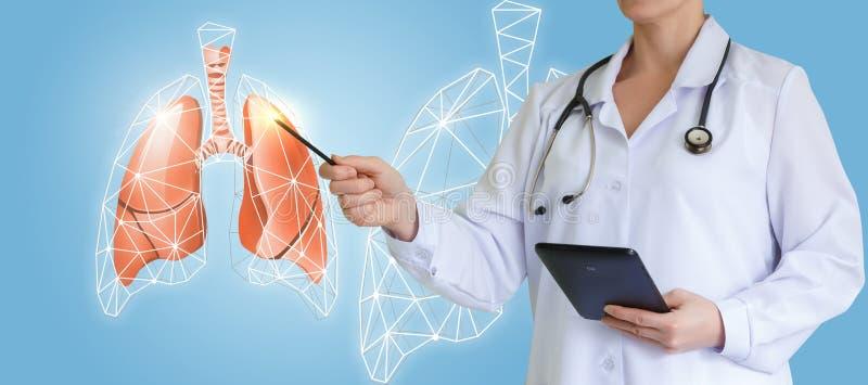 Medico mostra i polmoni interattivi di un'immagine fotografie stock libere da diritti
