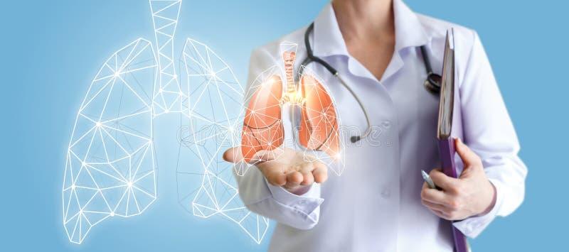 Medico mostra i polmoni umani fotografia stock