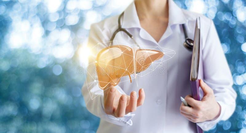 Medico mostra il fegato fotografia stock