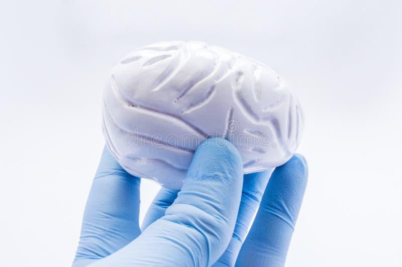 Medico tiene a disposizione, vestito in guanto blu, forma anatomica di cervello umano Immagine di concetto che simbolizza diagnos immagine stock