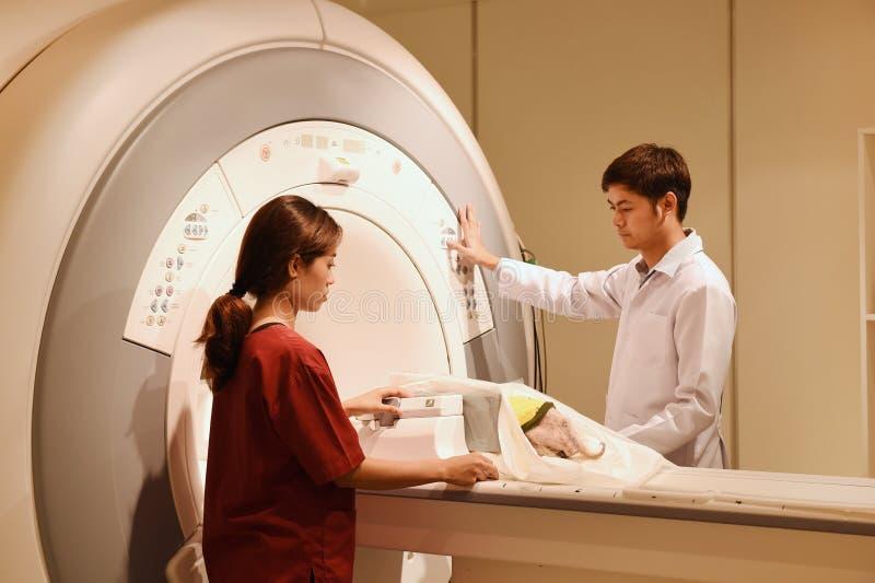 Medico veterinario che lavora nella stanza dell'analizzatore di RMI immagine stock