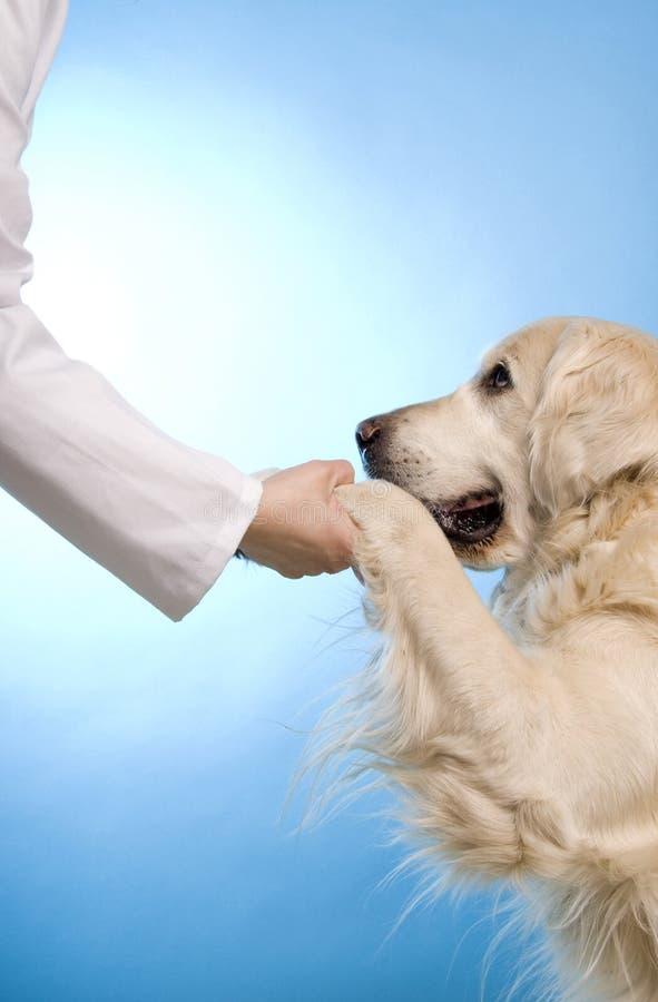 Medico veterinario con il cane fotografia stock libera da diritti
