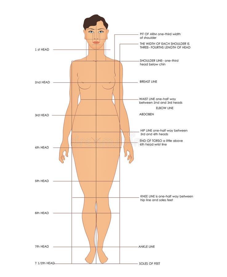 Medidas Sewing ilustração stock