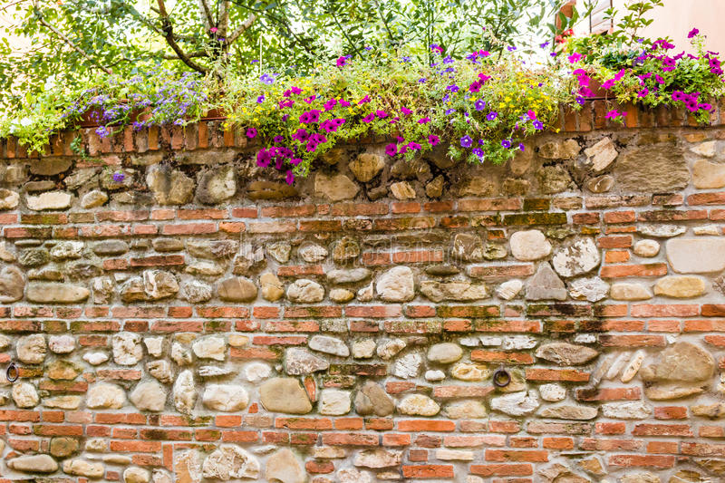 Medieval brick walls. Hanging down flowers on the medieval brick walls of the small village of Dozza near Bologna in Emilia Romagna, Italy stock photography