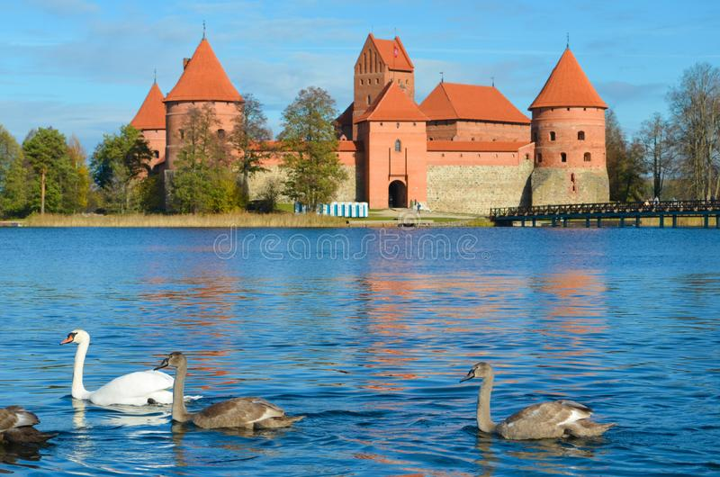 Medieval castle of Trakai, Vilnius, Lithuania, with family of swans stock photos