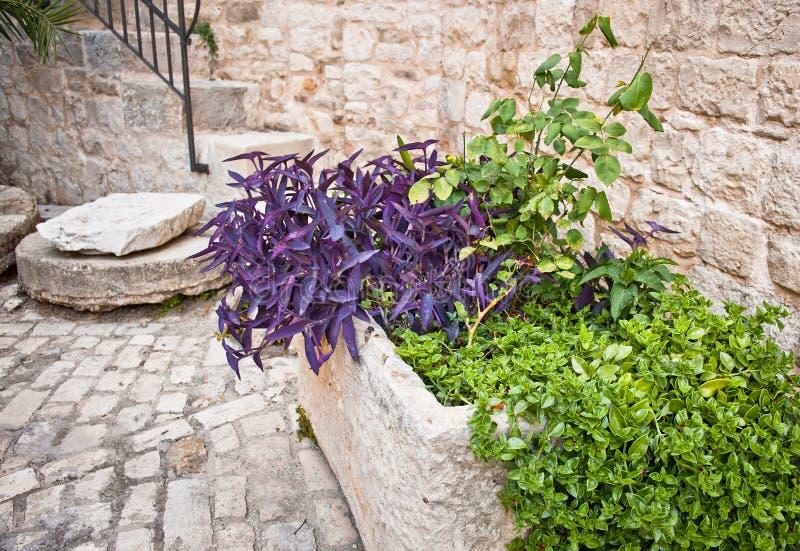 Download Medieval Courtyard, Trogir, Croatia Stock Image - Image: 27097445