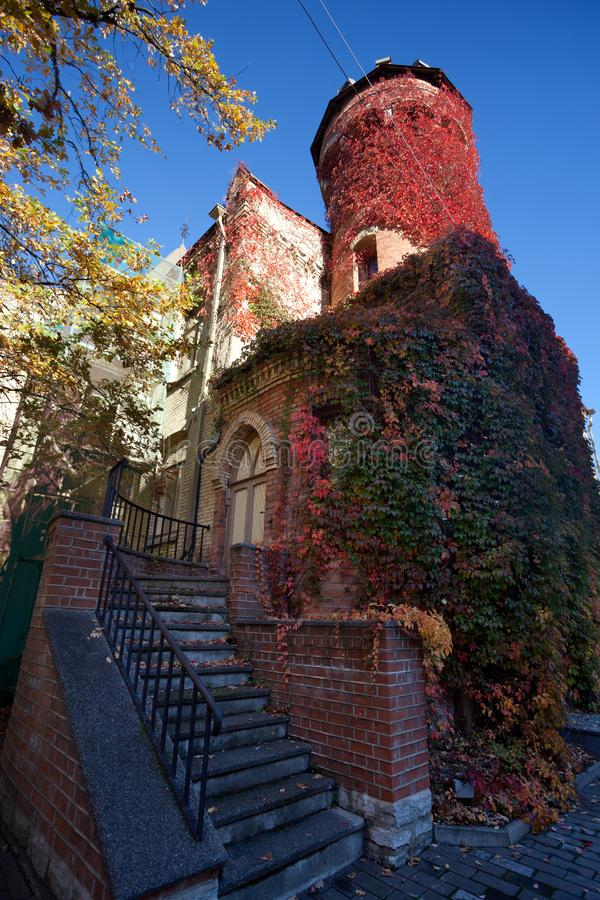 Medieval gothic house, carpet of many red and green leaves cover walls. Empty background - medieval gothic house, carpet of many red and green leaves cover walls royalty free stock image