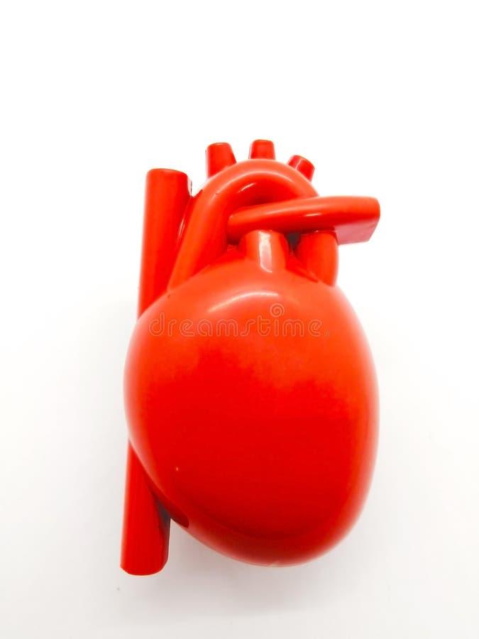 Medikationskonzept Zu küssen Mann und Frau ungefähr Rotes Modell menschlichen Herz isola lizenzfreie stockfotos