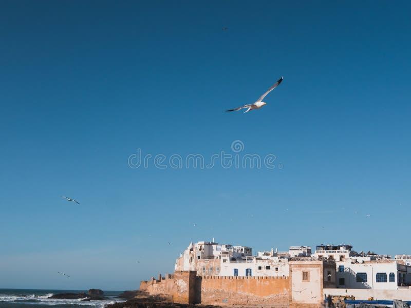 Medina de Essaouira, Marrocos, com a parede velha da cidade imagens de stock