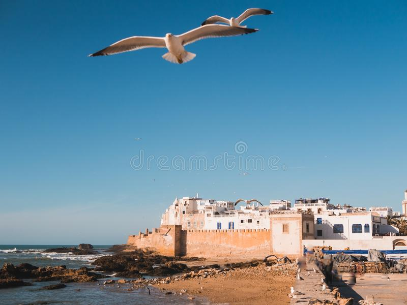 Medina of Essaouira, Morocco, with old city wall. And seagulls in foreground stock images