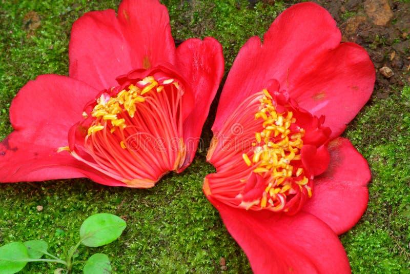 Medio - flor dividida fotos de archivo libres de regalías