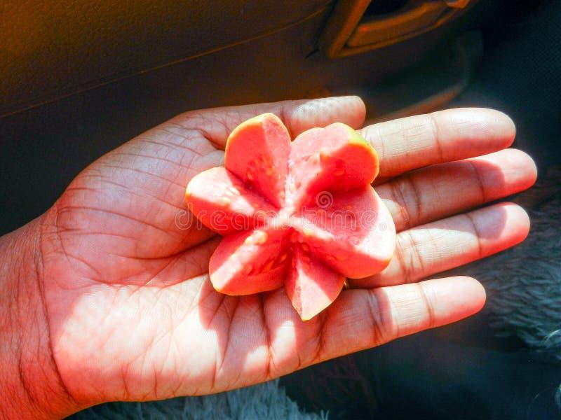 Medio guvava cortado rojo colocado en la palma foto de archivo