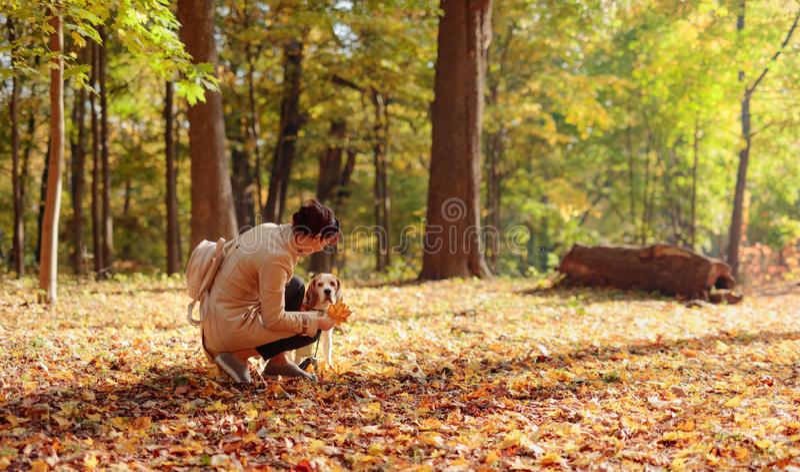 Medio leeftijdsvrouw die met brak in het de herfstpark lopen royalty-vrije stock fotografie