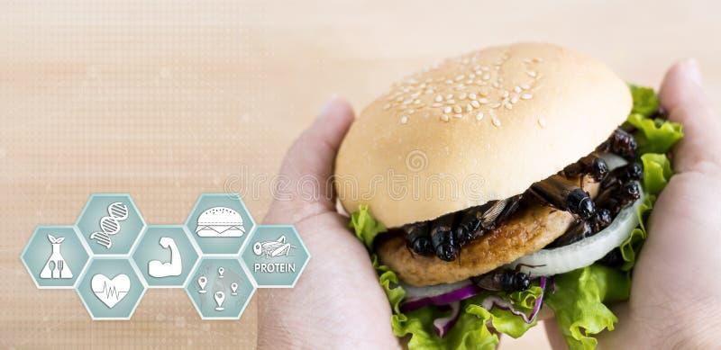 Medios nutrici?n de los iconos del insecto de los grillos para comer como alimentos hechos de insecto cocinado en hamburguesa y v imagen de archivo