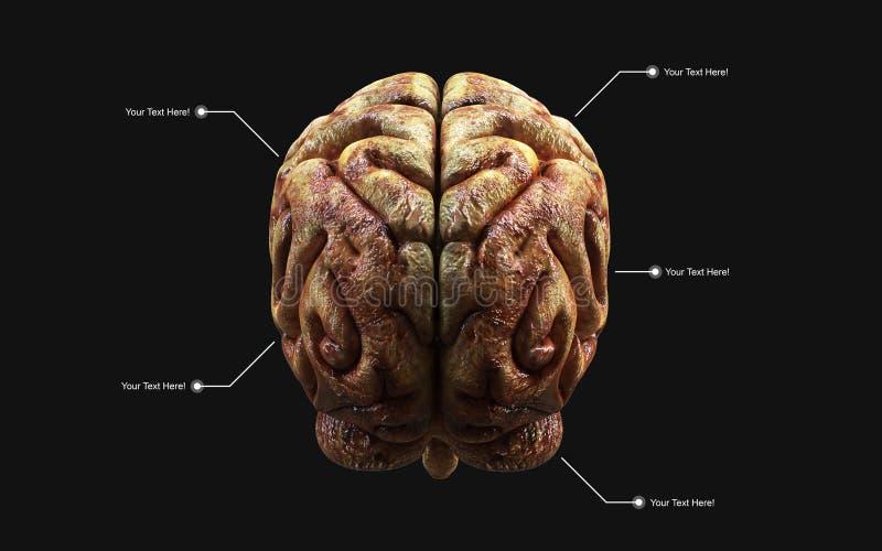 Medisch 3d illustratie van de menselijke hersenen met het knippen van weg vector illustratie