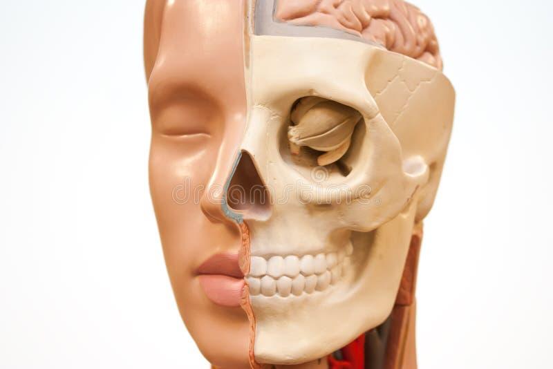 Medisch gezicht royalty-vrije stock foto