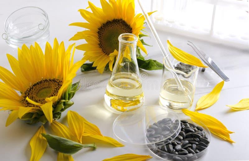 Medisch glaswerk, zonnebloemolie en zaden Laboratoriumkwaliteitscontrole stock foto