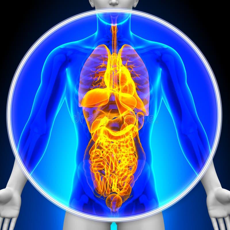 Medisch Röntgenstraalaftasten - Alle Organen stock illustratie