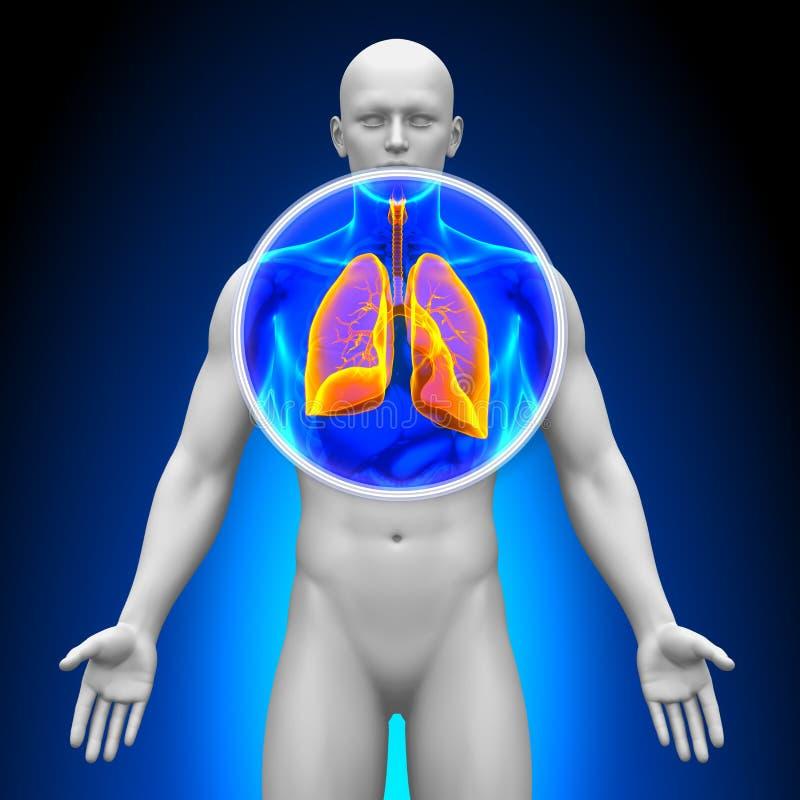 Medisch Röntgenstraalaftasten - Longen vector illustratie