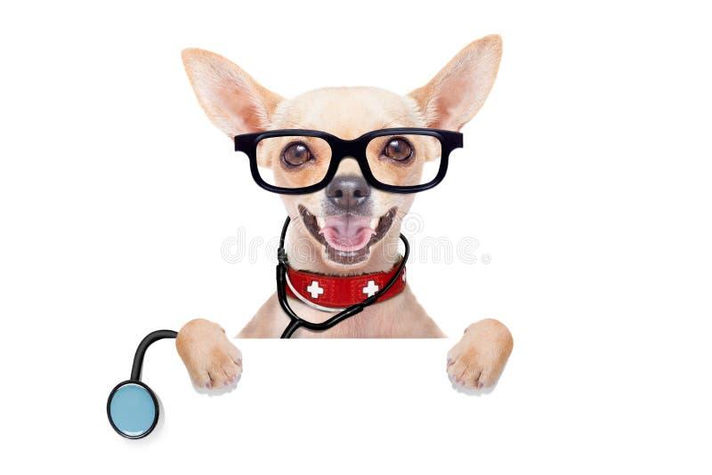 Medische artsenhond royalty-vrije stock foto's