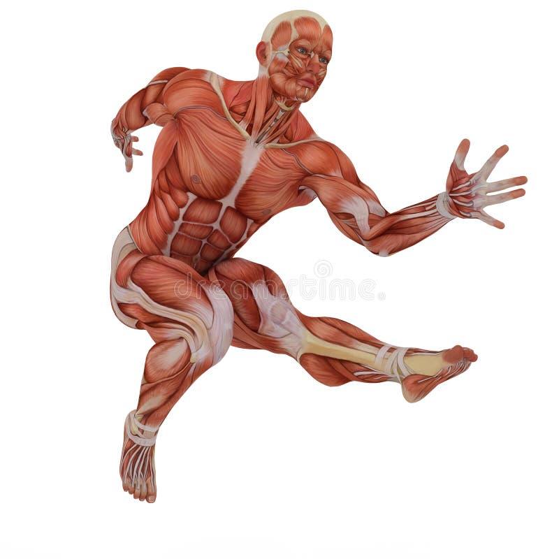 Medische de spier bemant de danssprong 2 van de sprongstraat royalty-vrije illustratie