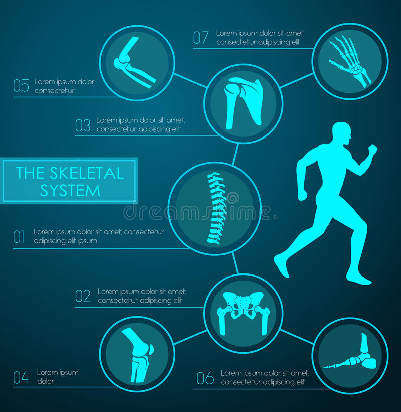 Medische infographic van menselijk skeletachtig systeem royalty-vrije illustratie