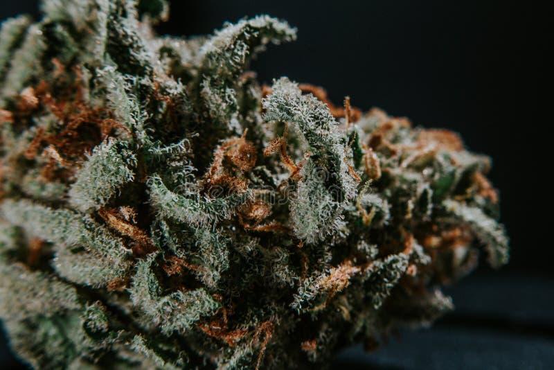 Medische Marihuana, Indica Cannabis, Sativa, Trichomes, THC, CBD, kankerbehandeling, onkruid, bloem, Hennep, gram, knop stock afbeeldingen