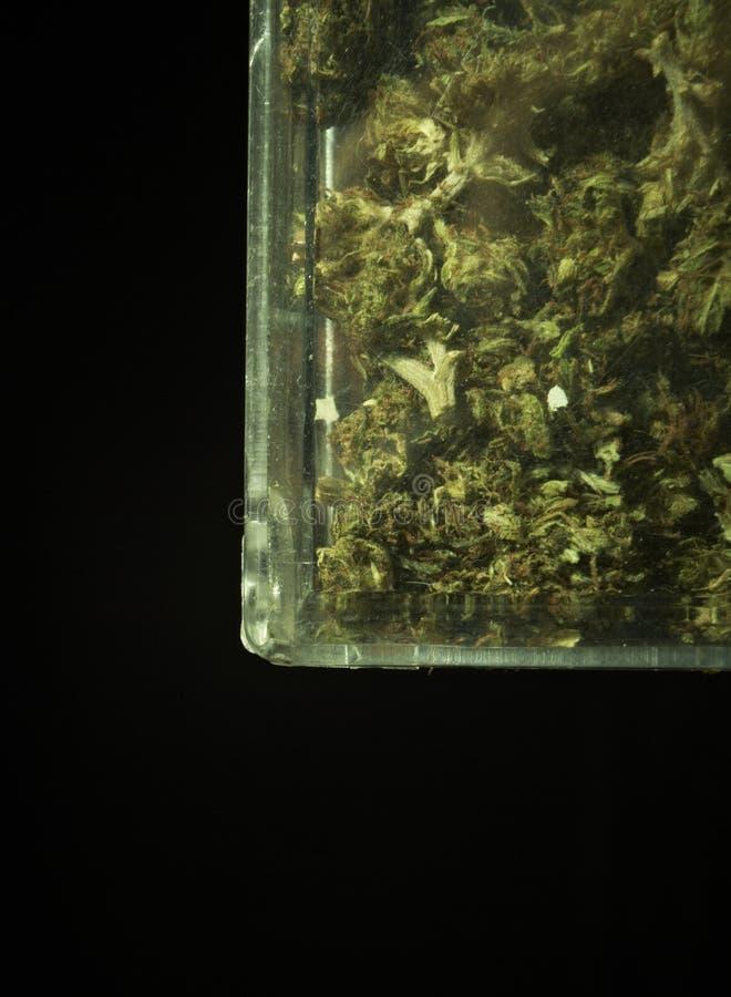 Medische Marihuana RX stock afbeelding