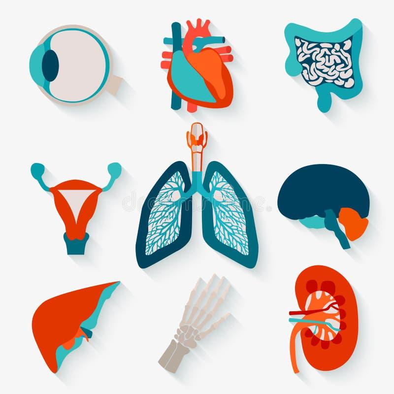 Medische pictogrammen van interne menselijke organen stock illustratie