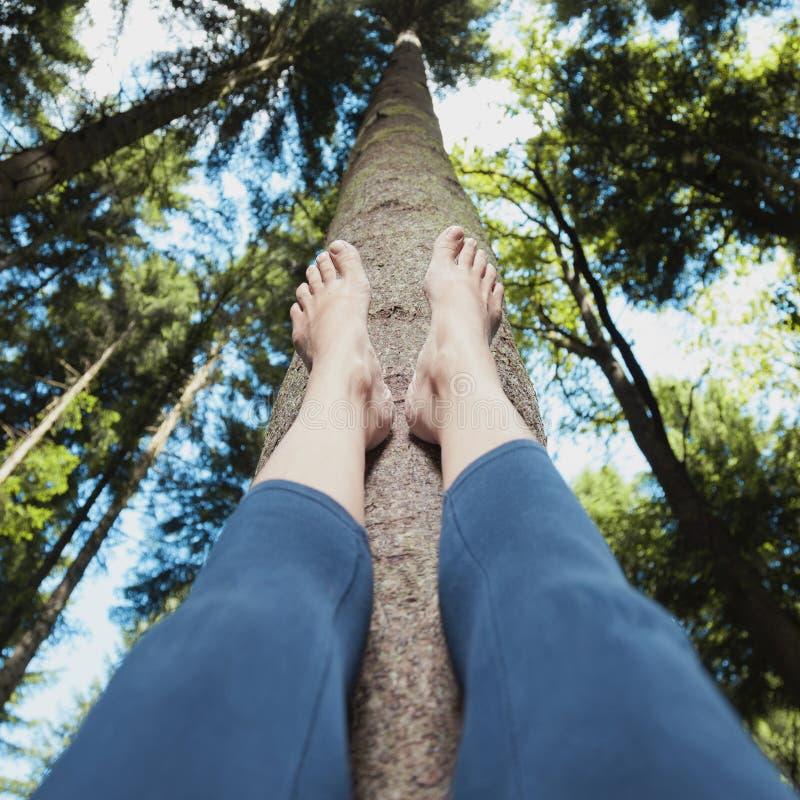 Meditação da mulher na floresta foto de stock royalty free