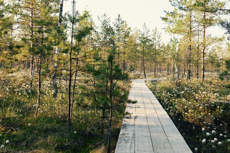 Meditação mágica do pântano da floresta da flor e imagem de relaxamento fotos de stock royalty free