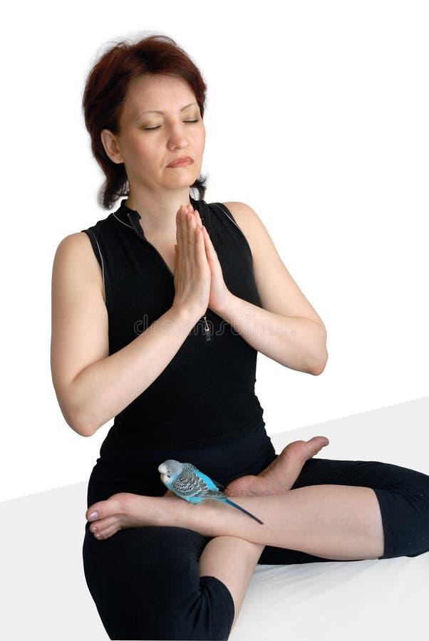 Meditación con un parro fotografía de archivo