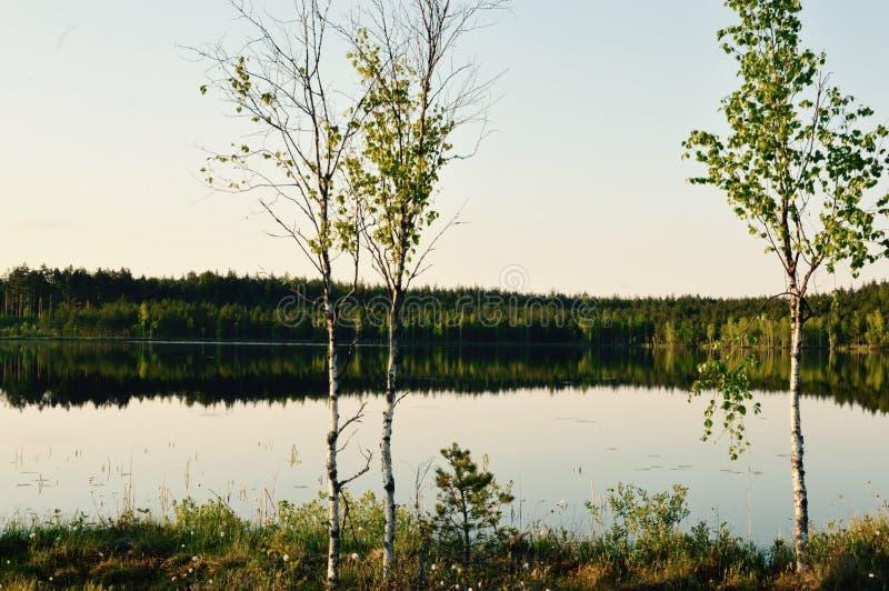 Meditación mágica del lago del bosque del abedul y imagen relajante imágenes de archivo libres de regalías