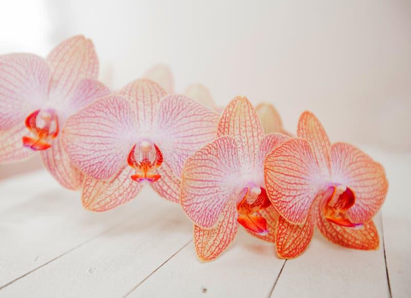 Meditation för orkidéblommabrunnsort royaltyfria foton