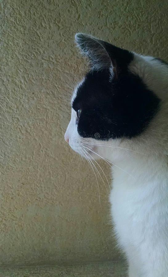 Meditative cat royalty free stock photos