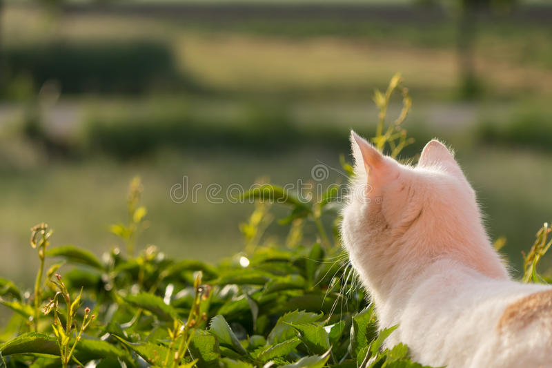 Meditative Cat in the Morning Sun royalty free stock photos