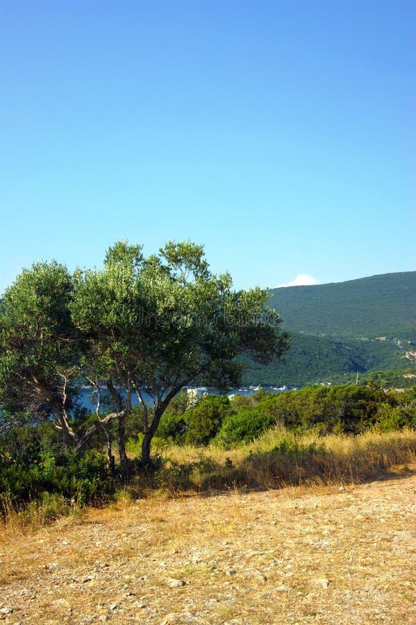 Mediterraan de zomerlandschap royalty-vrije stock afbeeldingen
