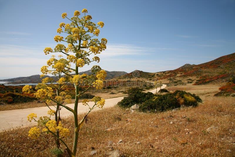 Mediterraan landschap royalty-vrije stock afbeelding