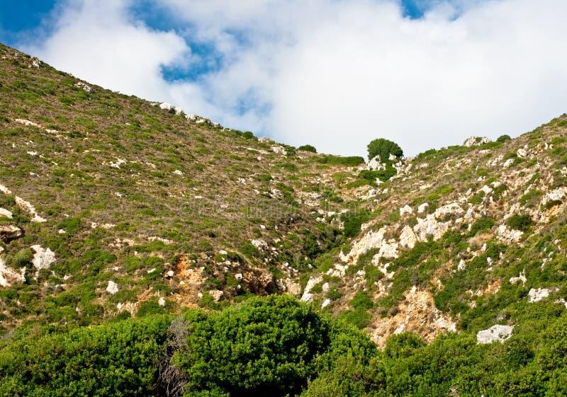 Mediterrane vegetatie royalty-vrije stock foto's
