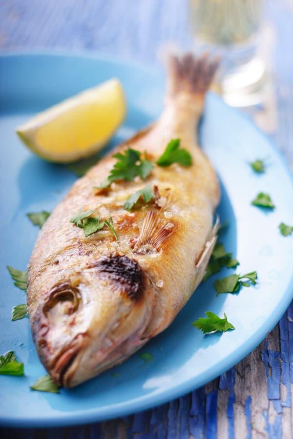 Mediterrane vissen royalty-vrije stock afbeeldingen