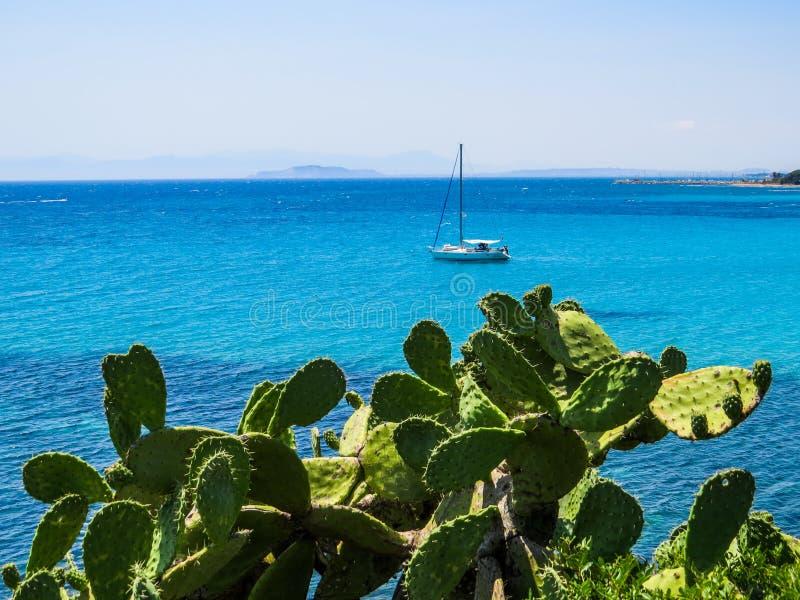 Mediterranean cactus royalty free stock photography