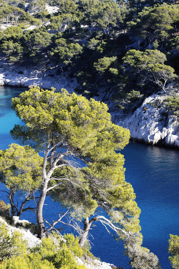 Download Mediterranean firs stock image. Image of france, cliff - 24006639