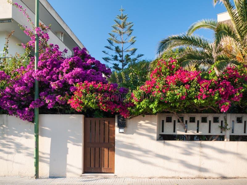 Mediterranean flower garden royalty free stock photography