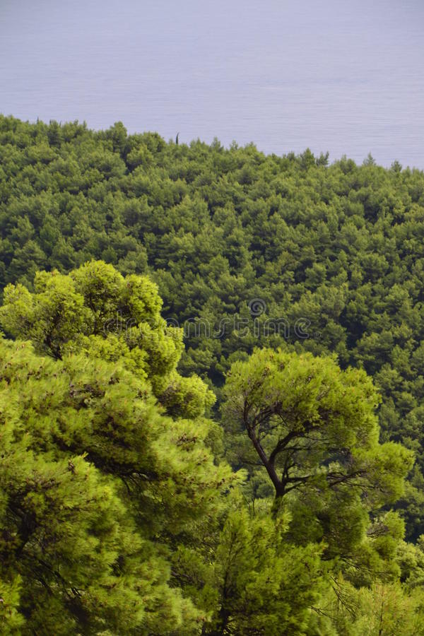 Free Mediterranean, Forest And Sea Stock Photo - 47177580