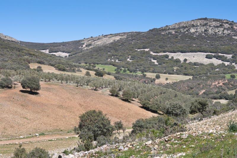 Download Mediterranean forest stock image. Image of malagon, landscape - 33970947