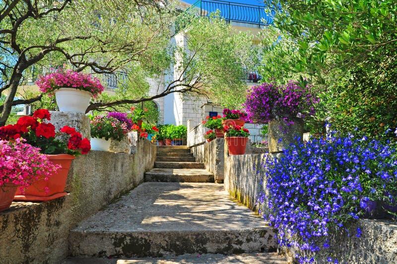 Mediterranean garden colorful plants royalty free stock photo