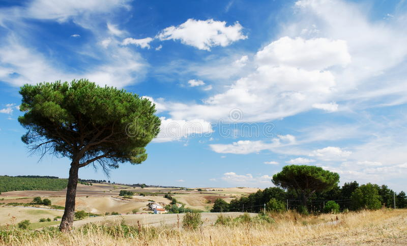 Mediterranean landscape. With parasol pine trees and moody sky stock images